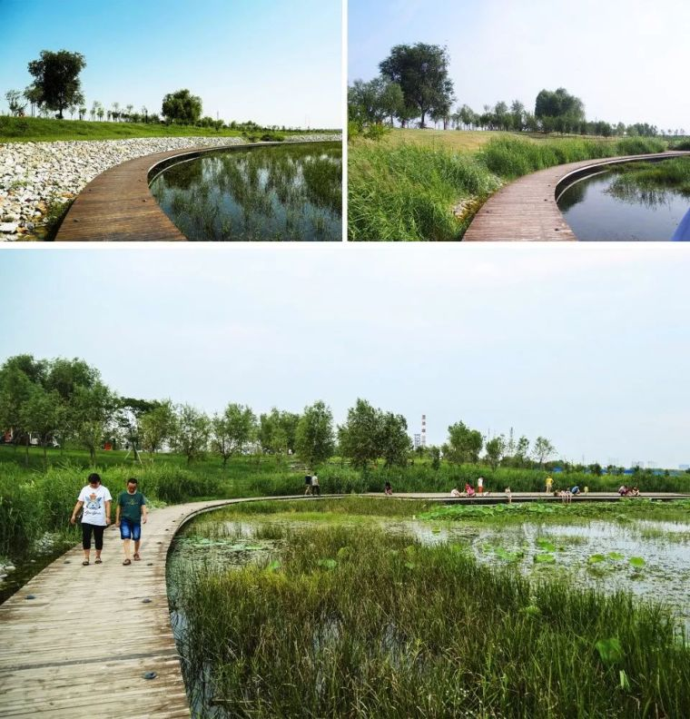 案例 渭柳湿地公园_8