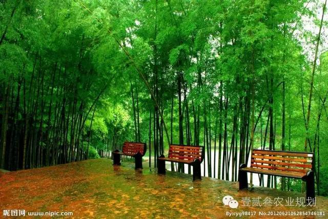 夏日竹韵——浅析竹子在景观设计中的应用_5