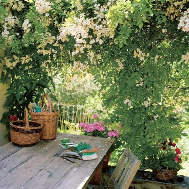 美美哒屋顶花园是可以自己亲手打造滴~_2