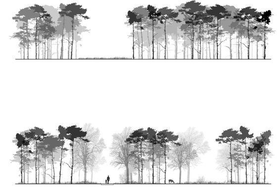 怎样把树种出艺术范?_19