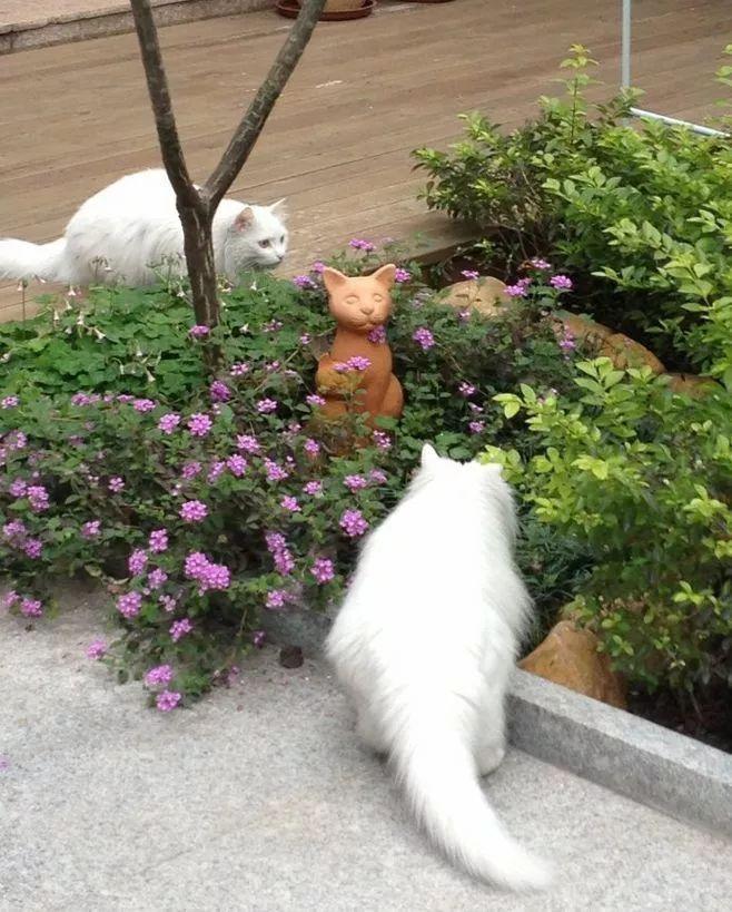 世界那么大,我却只想要个小院花开满园,自在从容……_15