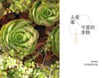 [多肉植物]150种常用多肉植物图鉴