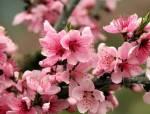 全国七大片区,常用开花植物集锦(上)