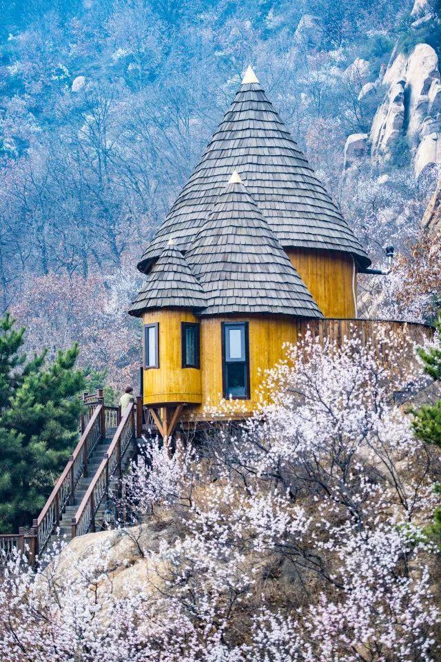这些树屋,满足你对森林的所有幻想_18
