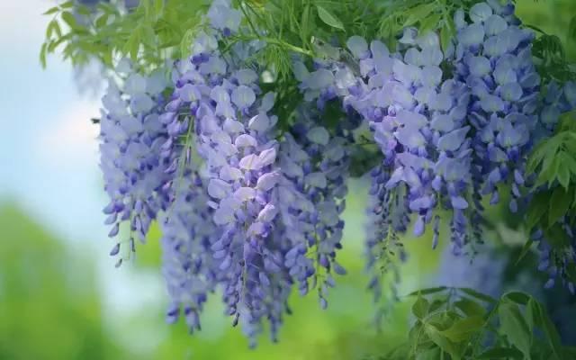 十八种藤本植物大集合~-021.jpg
