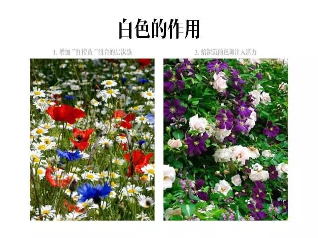 干货|庭院花园中的色彩搭配_23