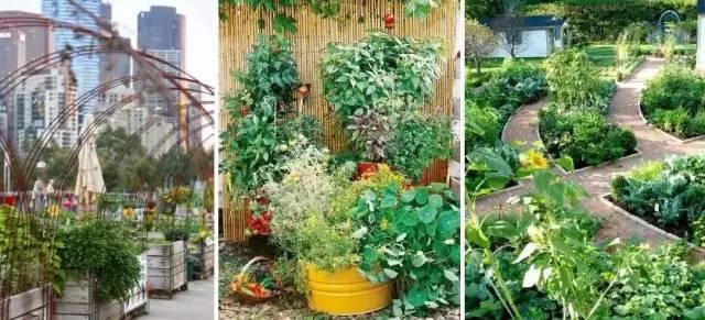 是菜园,也是花园