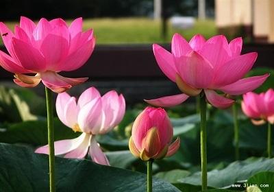 香花植物-嗅觉盛宴_16