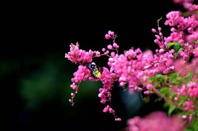 十八种藤本植物大集合~-045.jpg