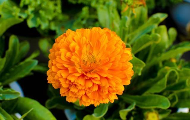 秋季要种的高颜值好养易活的植物界小公举!_5