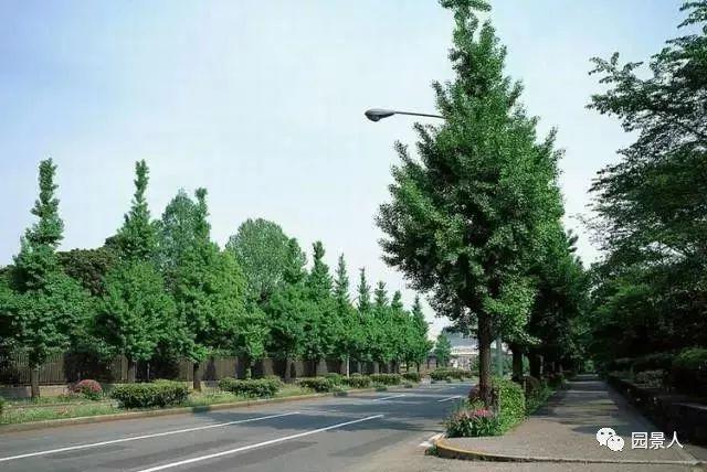城市干道植物配置,实用干货不得不看!_11