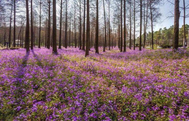 收藏 园林地被植物最全应用