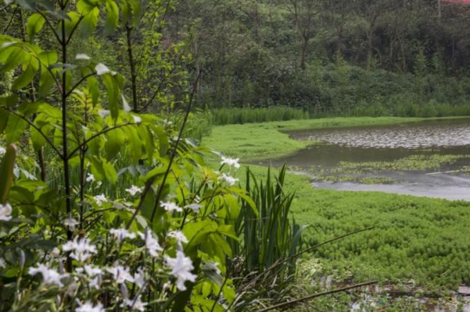 [重庆]生态山地田园国家级湿地公园景观设计方案(附实景图)_13