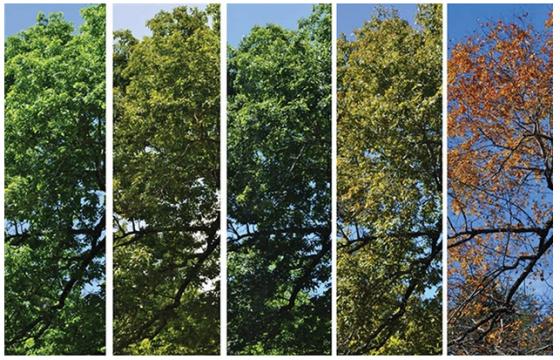 """景观设计师必须懂的""""植物季相"""""""