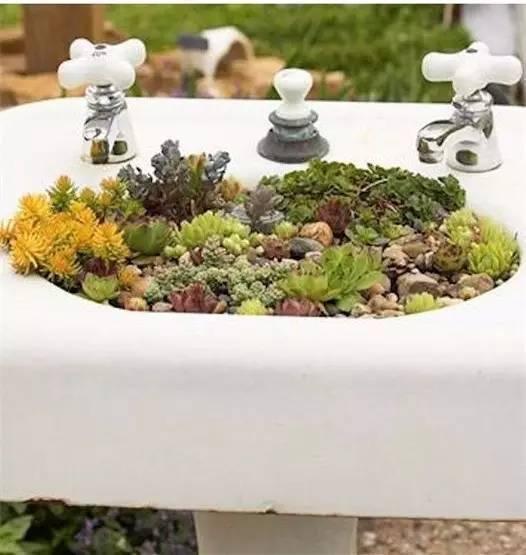 21种方法种花,比在花盆里美十倍!_8