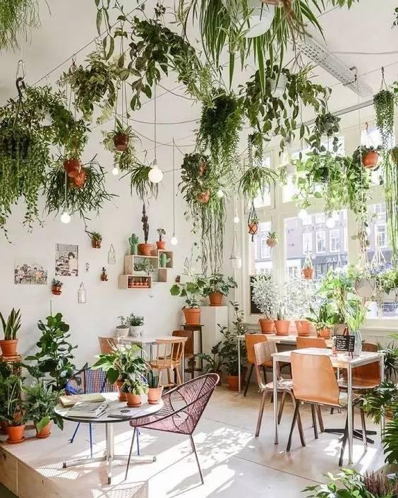 雾霾天,你需要这18种植物清新空气