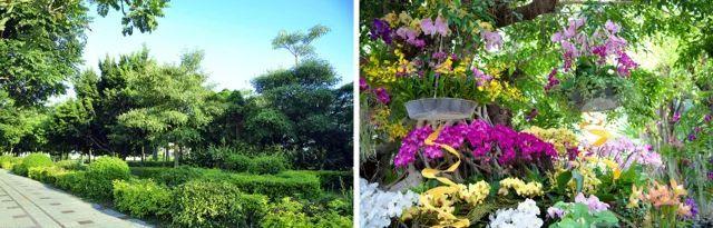 植物景观设计要点分析——在医疗与养老空间中的运用!