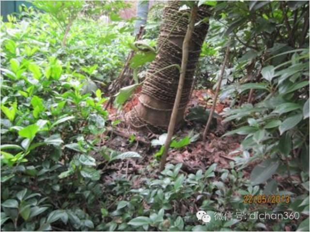 万科园林景观《交付前13道评估项&高分做法》!