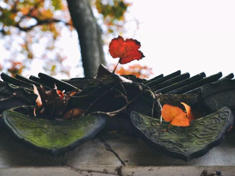 中国最美红叶观赏指南,错过再等一年_23