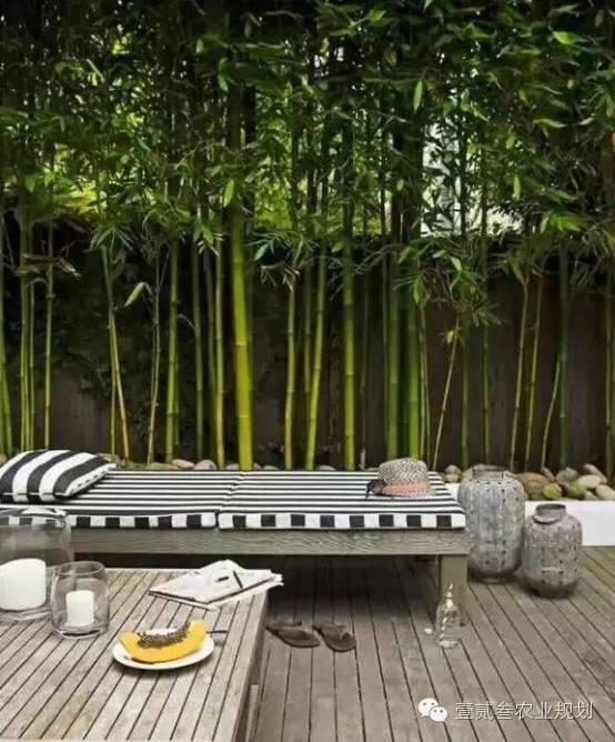 夏日竹韵——浅析竹子在景观设计中的应用_8