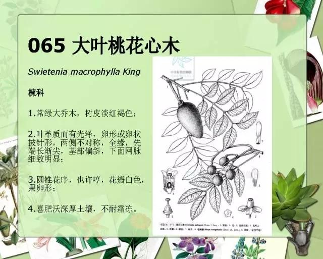 100种常见园林植物图鉴-20160523_183224_074.jpg