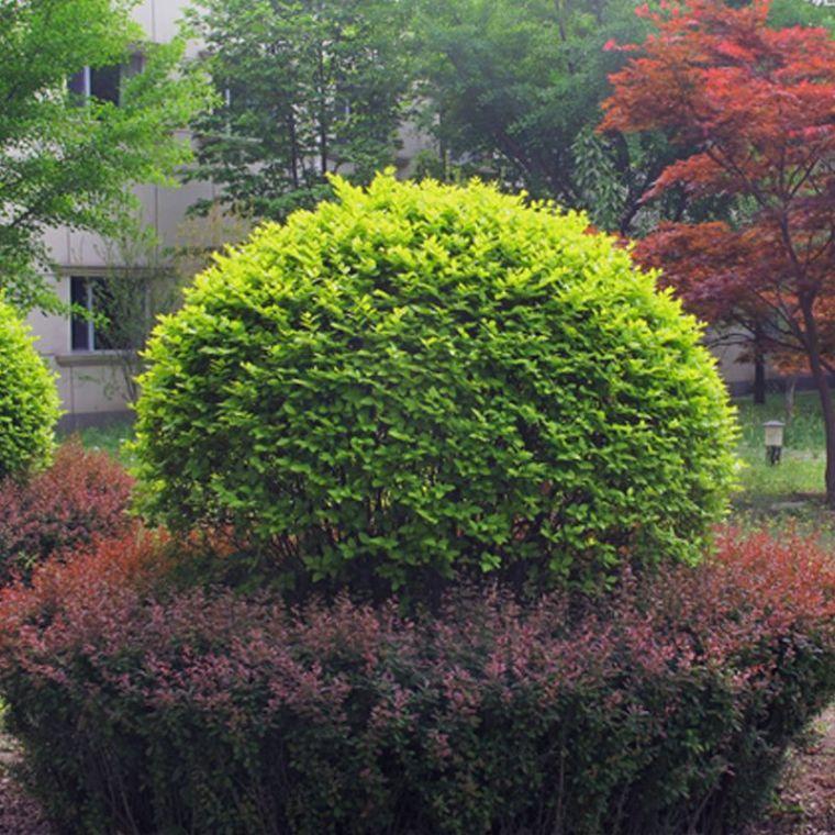 如何用植物装点你的园林景观!_3