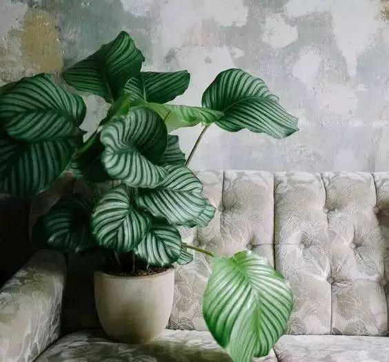 空气质量告急?这些扫霾植物排行榜中第一名竟然是......_42