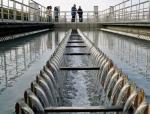 上海污水治理工程-顶管对接方案