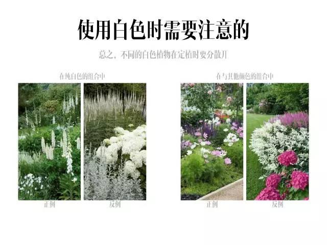 干货|庭院花园中的色彩搭配_22