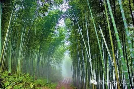 夏日竹韵——浅析竹子在景观设计中的应用