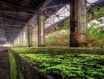 【筑·言】可持续建筑可不只是插插花!