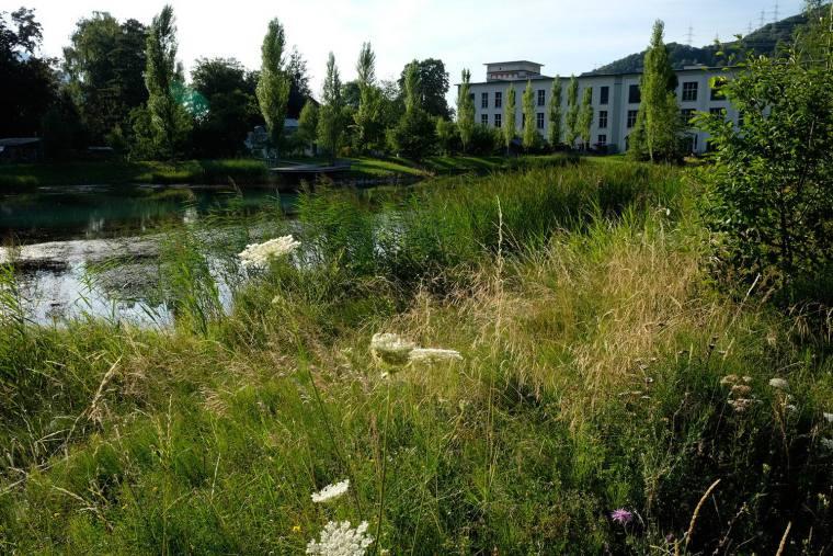 瑞士LowerFactoryPond水系环境修复-4