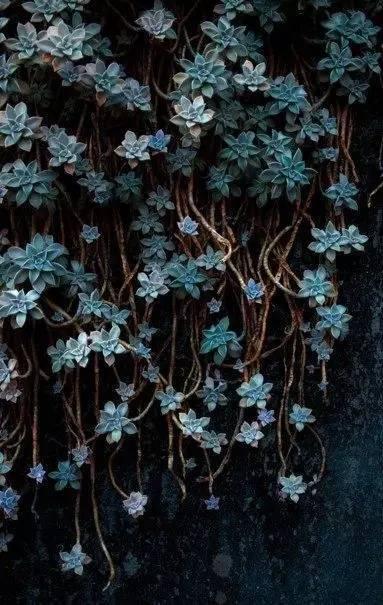 攀缘植物竟然可以如此美!_21