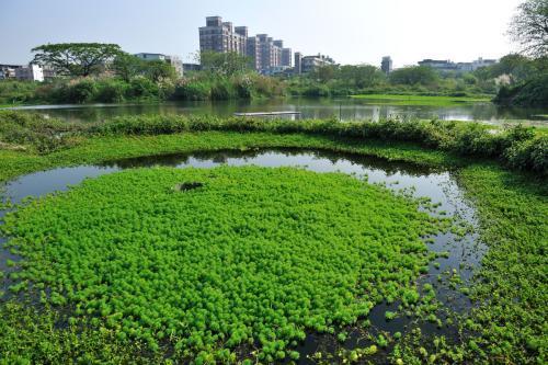 [贵州]黄果树风景人工湿地污水处理工程设计方案