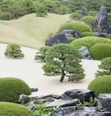 """园林造景,看""""树""""的气场!_8"""