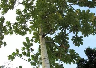 植物界的吉尼斯世界纪录大全-640.webp (37).jpg