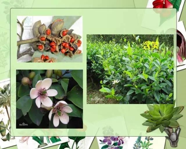 100种常见园林植物图鉴-20160523_183224_017.jpg