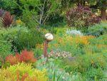 混合花境设计与种植建议!