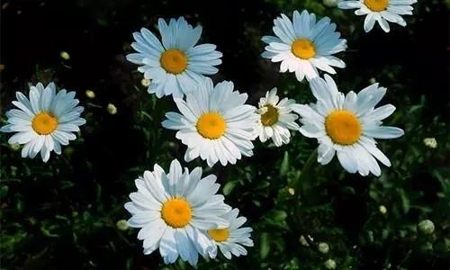 植物界的吉尼斯世界纪录大全-640.webp (29).jpg