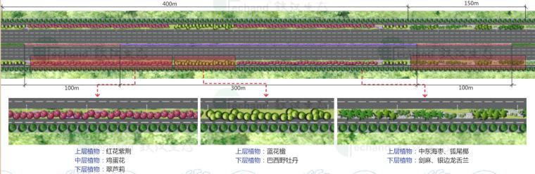 [广东]湛江海东快线概念景观设计(PDF+55页)-植物配置
