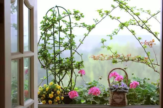 想要这样一个阳台,过小日子,看花开_14