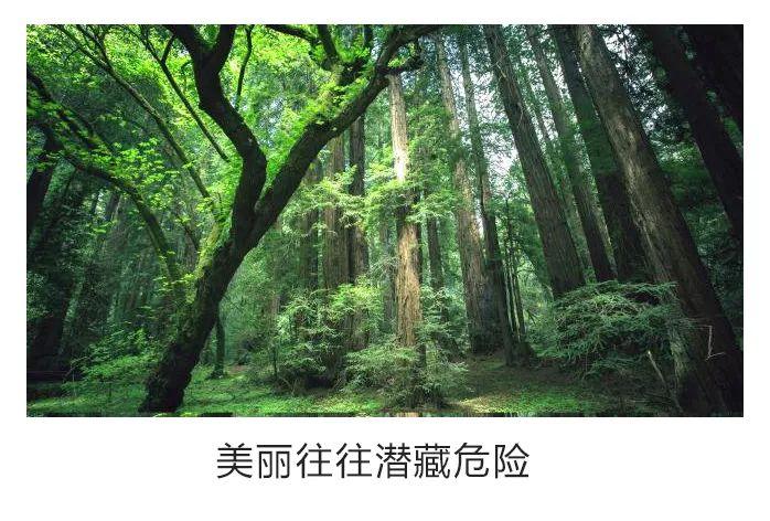 景观中的安全性到底重不重要——美国泪滴公园告诉你_37
