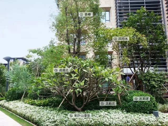 最详细图解:深圳湾三大豪宅景观植物配置!_5
