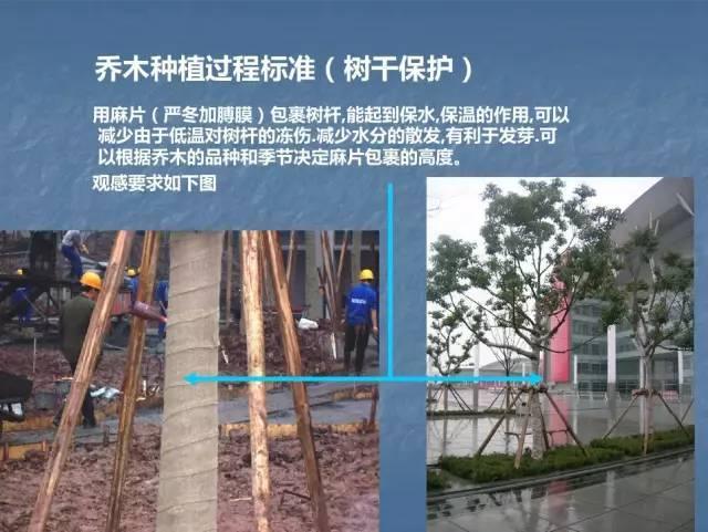 龙湖景观施工工艺标准效果(让你更懂现场)--软景篇_21