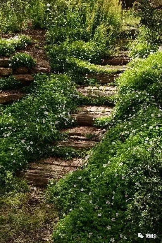 花草与石板的关系•花园小径_26