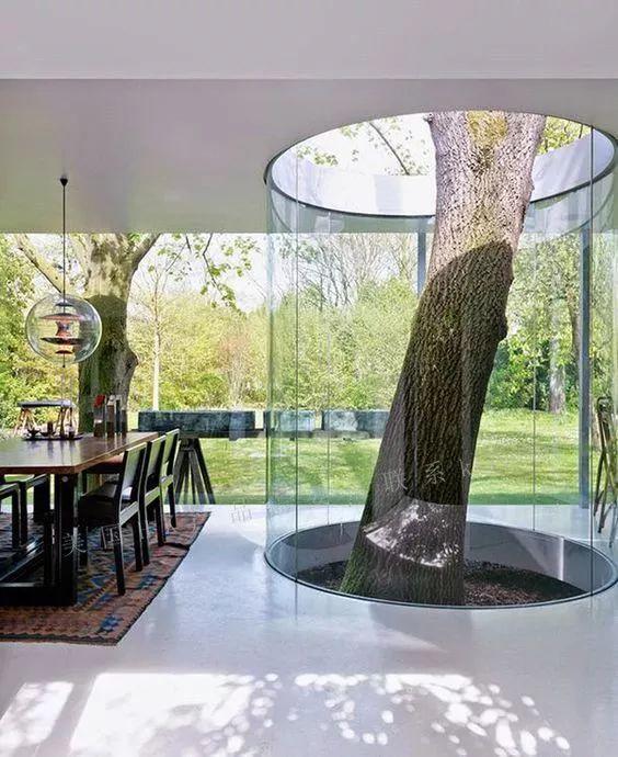 当你的房子里有一颗树_2