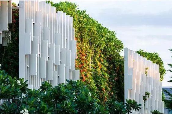 垂直绿化植物的选择 · 实用干货