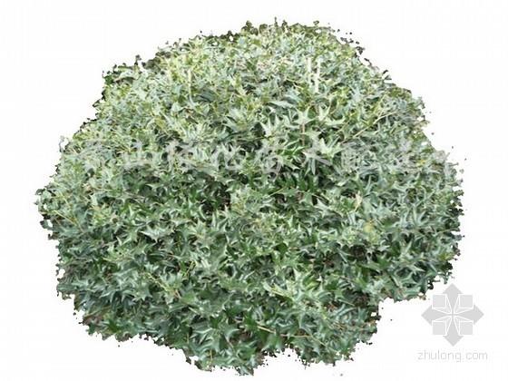 4种植物素材
