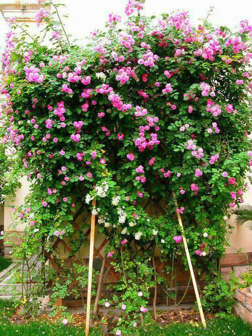 想要一个小院子,花开花落一辈子_21