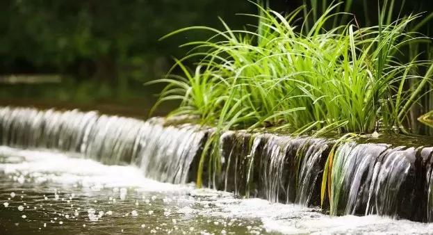 如何在别墅花园水景设计中选择水生植物